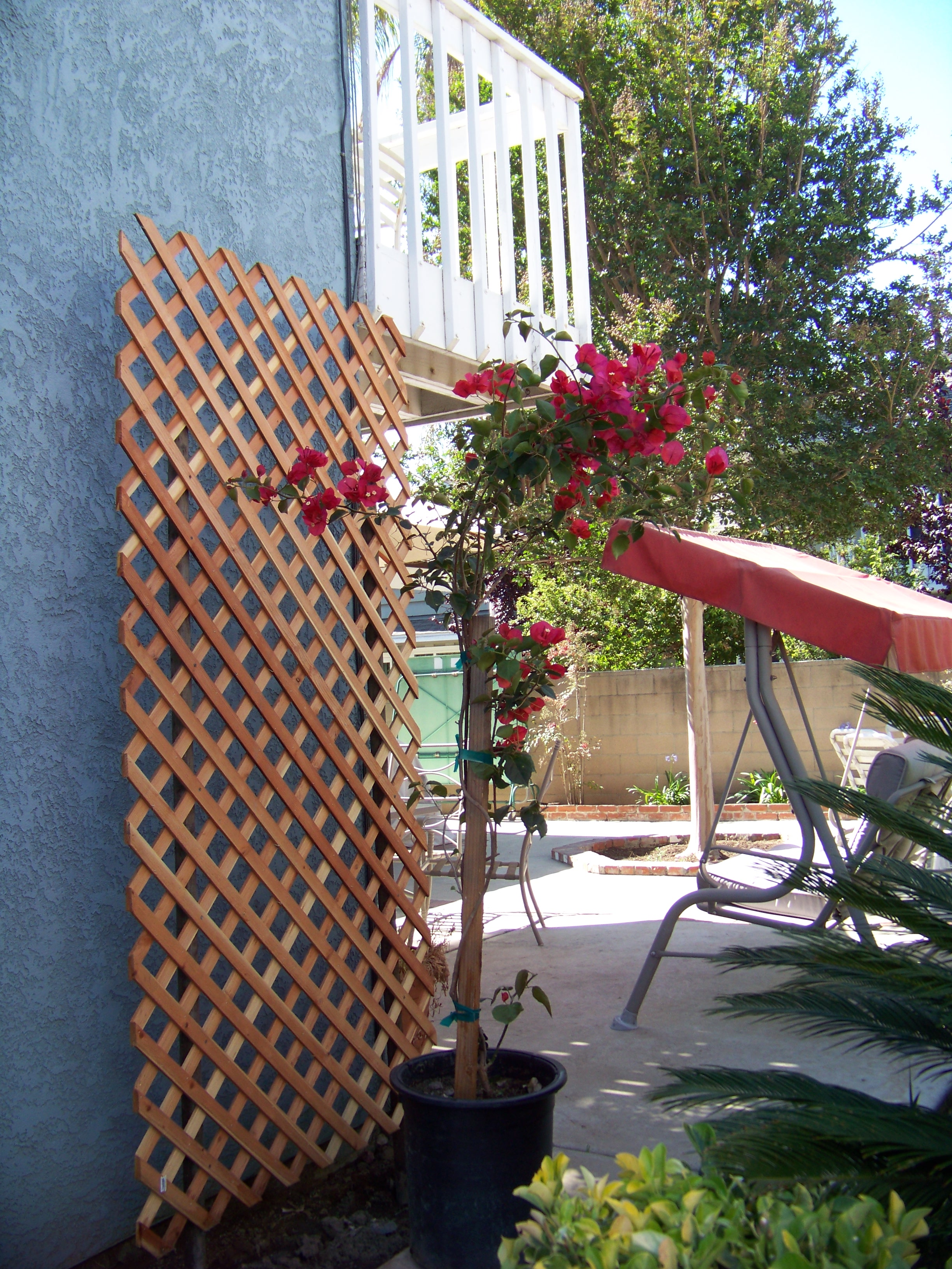 Bougainvillea Trellis Www Imgkid Com The Image Kid Has It