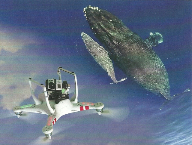 Illustra whales